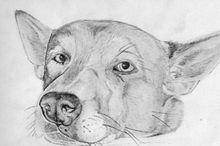 60min Animal Pencil Sketching Art Lesson - Dog