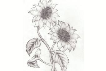 60min Learn to Sketch: Sunflowers