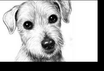 45min Animal Sketching Lesson - Puppy