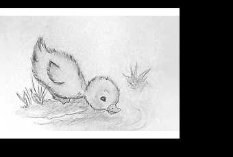 45min Baby Animal Sketching Lesson - Duckling