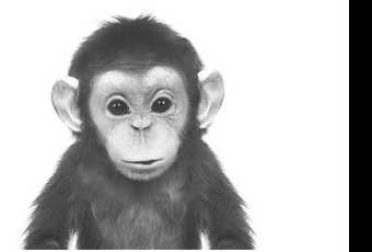 60min Animal Pencil Sketching Art Lesson - Baby Chimp