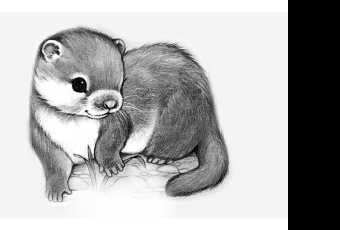60min Animal Pencil Sketching Art Lesson - Baby Otter