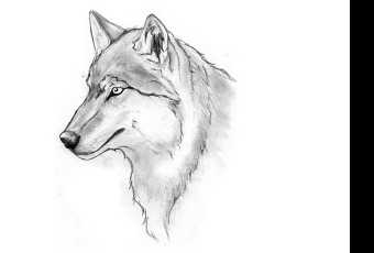 60min Animal Pencil Sketching Art Lesson - Wolf