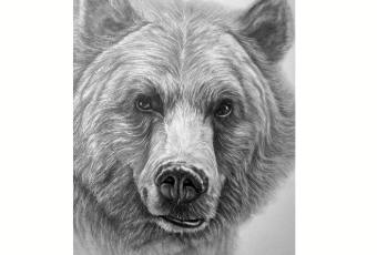 60min Animal Pencil Sketching Art Lesson - Bear